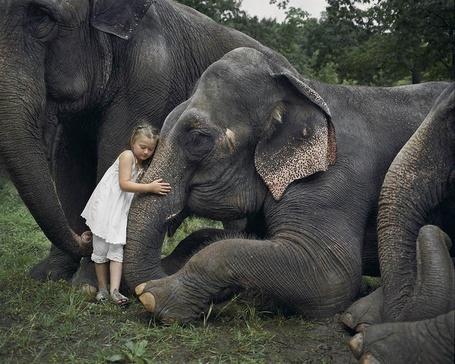 Фото Девочка в белом платье обняла слона за хобот