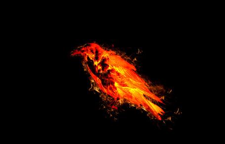 Фото Огненный ворон на черном фоне