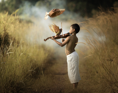 Фото Мальчик играет на скрипке в поле, стоя на дороге, вокруг летают птицы