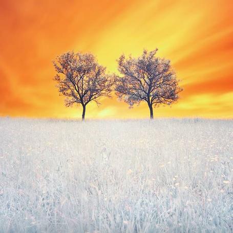 Фото Два дерева растут в поле (© Banditka), добавлено: 24.07.2013 14:11