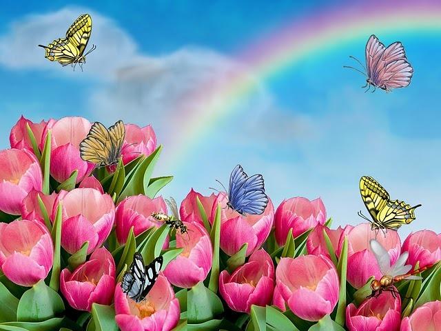 В цветах радуги скачать