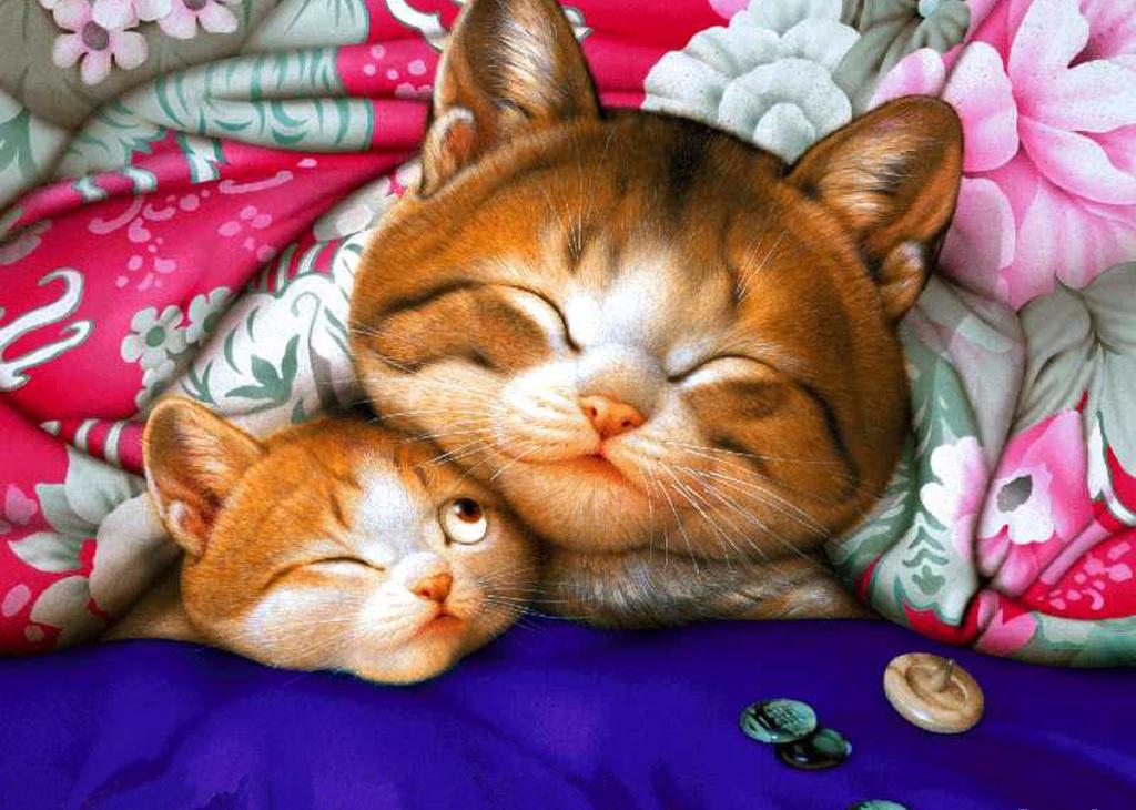 День, открытки спящий кот
