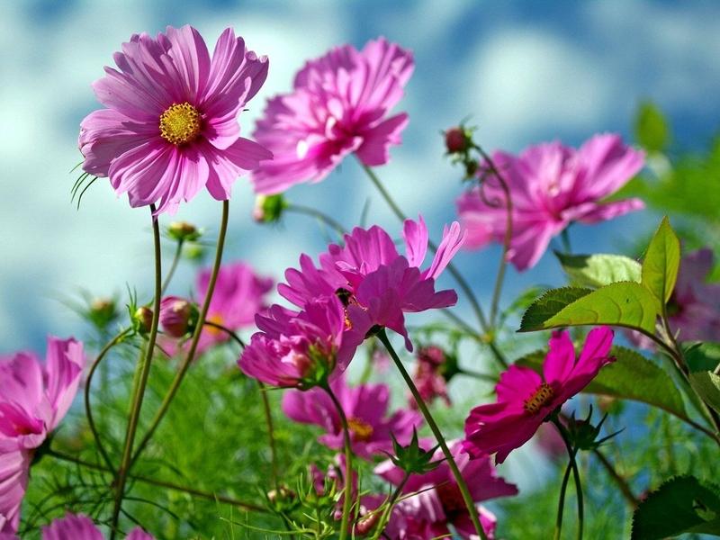 Разрешение 1920x1200, природа, красота, лето, Цветы, уже 4116-я картинка в базе zwalls.ru