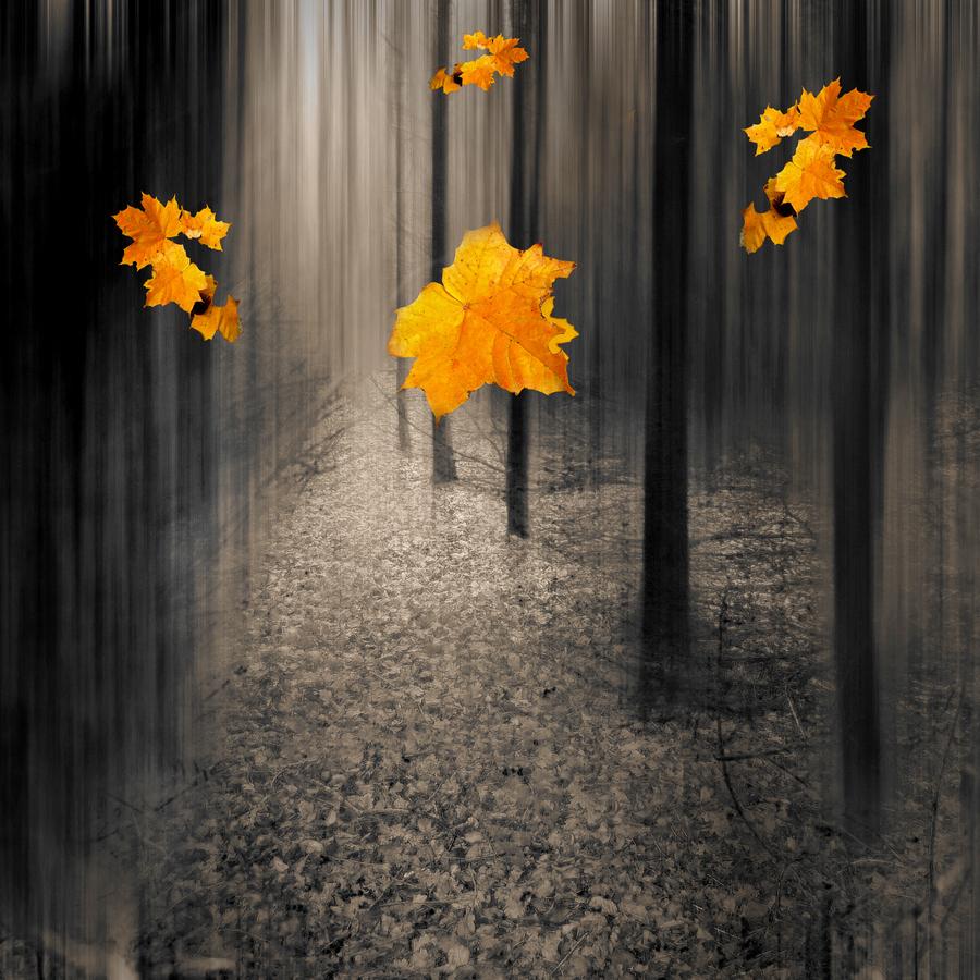 Фото Падающие кленовые листья на фоне леса: http://photo.99px.ru/photos/118830/