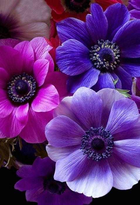 Фото сиреневых и фиолетовых цветов