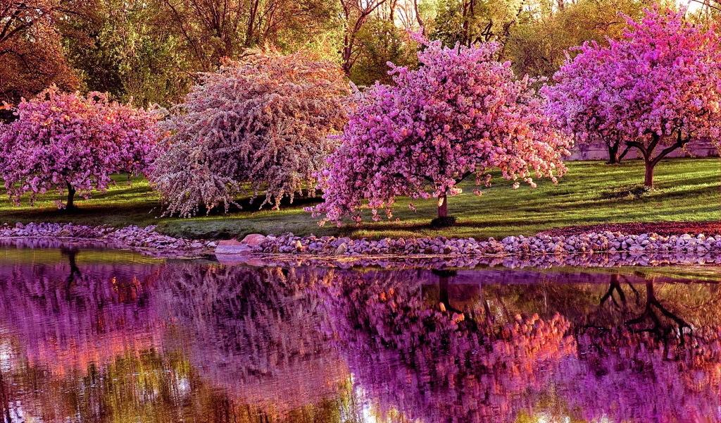 Banco de Imagens Sakura florescendo na primavera, crescendo ao longo de um canal de água, Parque Nacional, Tóquio, Japão / Tóquio, Japão