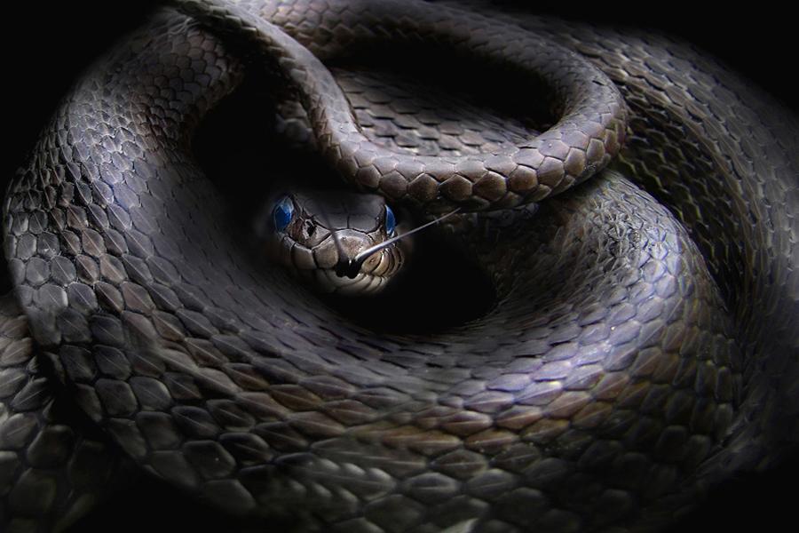 картинки рисунки фото змей фотография россии сих