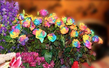 Фото Розы, бутоны которых окрашены в радужный цвет и другие цветы (© Поп-корн), добавлено: 03.08.2013 09:20