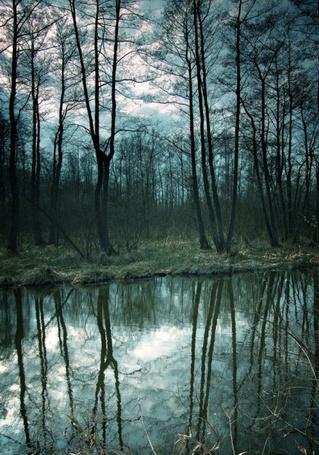 Фото Голые деревья на берегу реки