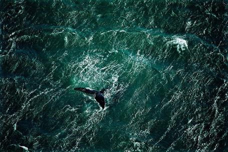 Фото Кит у полуострова Вальдес, Аргентина / Valdes, Argentina, фотограф Ян Артюс-Бертран