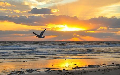 Фото Чайка пролетает над берегом моря на фоне заходящего солнца в небе
