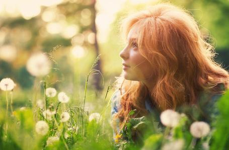 Фото Рыжая девушка лежит на поляне пушистых одуванчиков