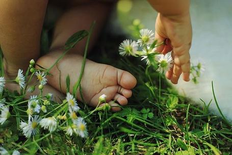 Фото Детские ручки и ножки на зеленой траве с ромашками, фотограф Alexandra Sophie / Александра Софи (© Светлячок), добавлено: 12.08.2013 20:31