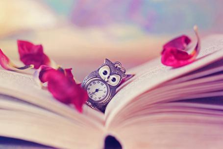 Фото Кулон - сова лежит на страницах раскрытой книги, рядом розовые лепестки розы, фотограф Silvermoonswan