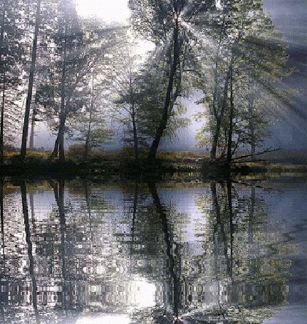 Фото Солнечные лучи пробиваются сквозь деревья, которые растут на берегу реки, отражаясь в ней