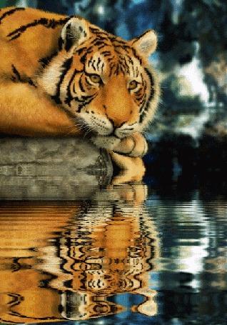 Фото Полосатый тигр, лежащий на берегу водоема