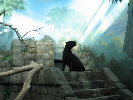 Фото Пантера, сидящая на каменной лестнице