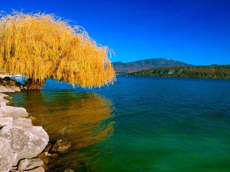 Фото Сухое дерево в воде на фоне неба
