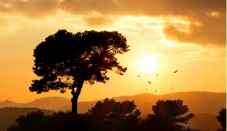Фото Птицы летают на фоне солнца
