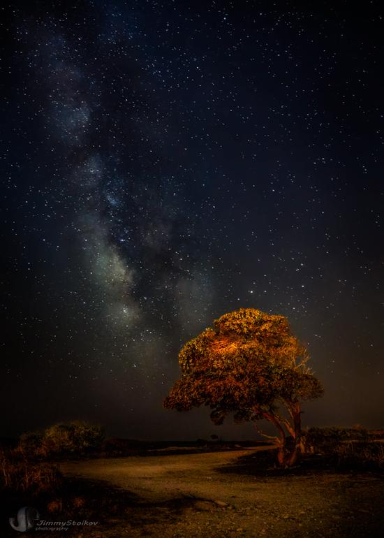 Фото Дерево с пышной лиственной кроной бурого цвета ...