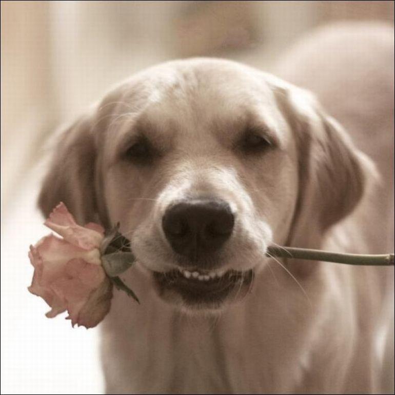День единства, гифки собака с цветком в зубах