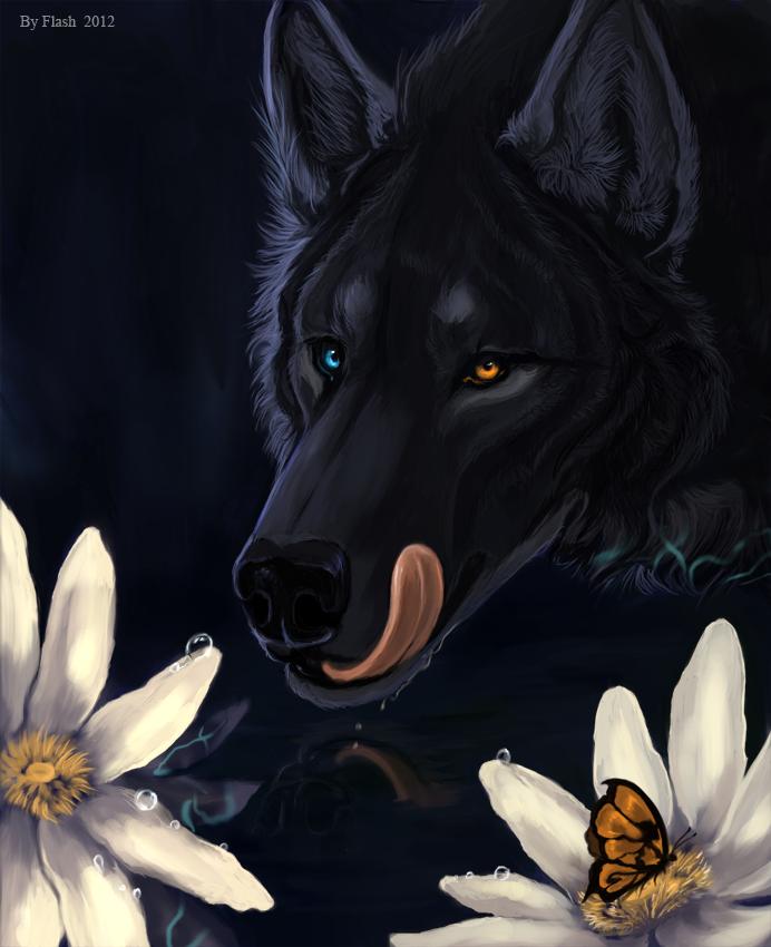 Фото черный волк с разноцветными
