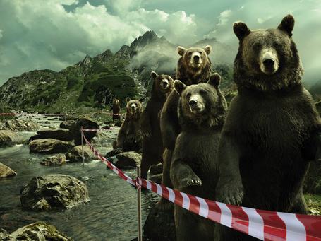 Фото Медведи стоят в очереди за оградительной лентой, рядом течет горная река, позади виднеются горы и облачное небо