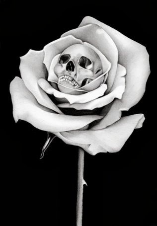 Фото Белая роза с черепом внутри на черном фоне