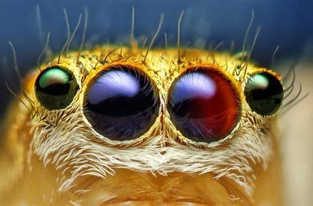 Фото Глаза паука, фотограф Thomas Shahan / Томас Шахан