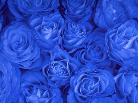 Фото Синие розы (© Mary), добавлено: 02.03.2012 17:48