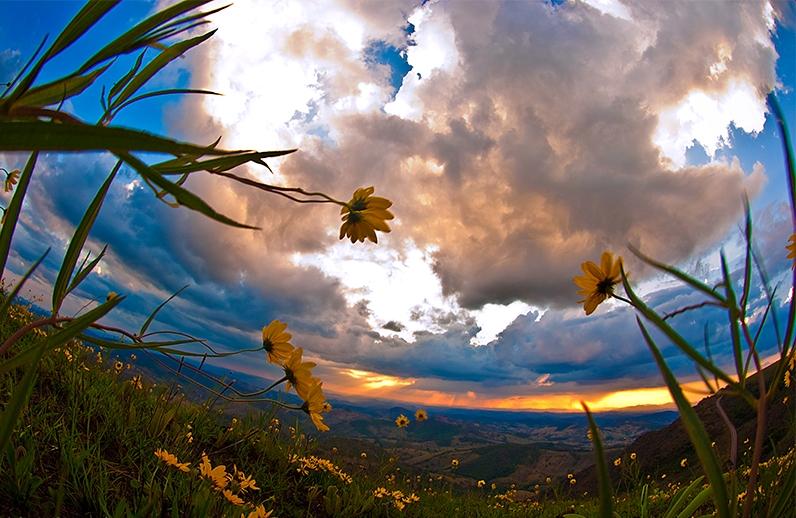 Фото желтые цветы на фоне огромных