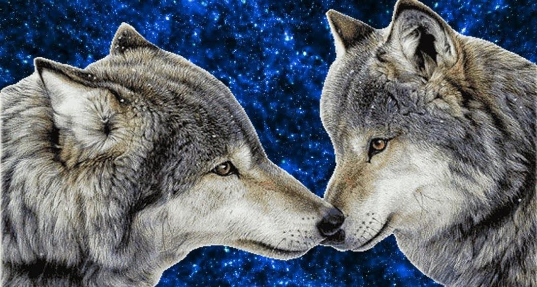 познал все два волка и волчица картинки находится как