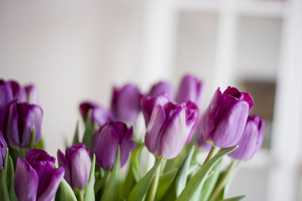 только стихи фиолетовые тюльпаны очаг находится