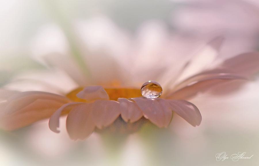Фото цветов с каплями росы