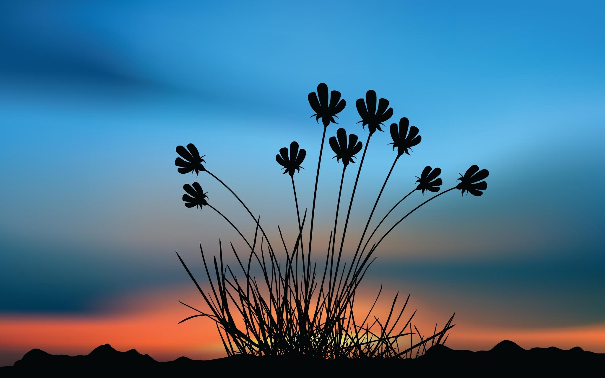 Картинки цветы на фоне заката