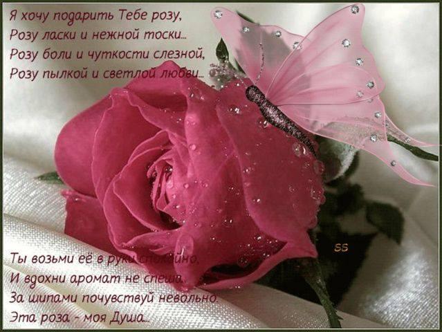 Я тебе подарю шипы и розы