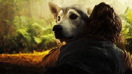 Фото Момент из сериала Game of Thrones / Игры престолов, когда Ария / Arya, чью роль исполняет актриса Мэйси Уильямс / Maisie Williams просит свою волчицу уйти