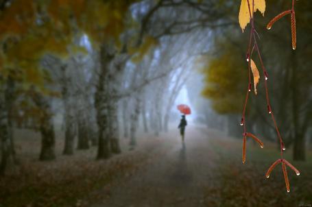 Фото Девушка идет с красным зонтом в дождь по осенней березовой аллее. Фотограф Игорь Зенин / Igor Zenin