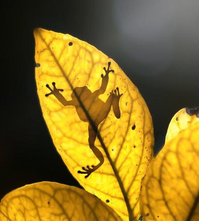 Фото Тень лягушки на осеннем листе
