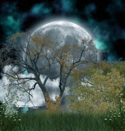 Фото Большое дерево на фоне огромной полной луны, автор AshenSorrow