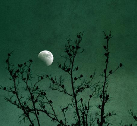 ���� �� ������ ������ ����� ������, �� ���� ������ ���� (� zmeiy), ���������: 13.10.2013 18:37