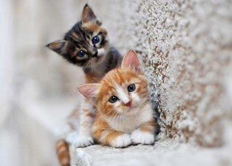 Фото Два маленьких котенка смотрят прямо на нас