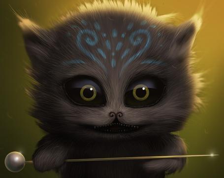 Фото Енот с голубым рисунком на лбу