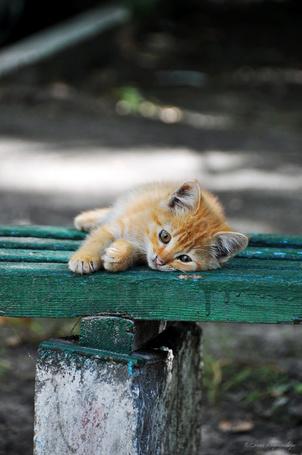 Фото Бездомный рыжий котенок лежит на лавочке очень грустный, фотограф Инна Богородская