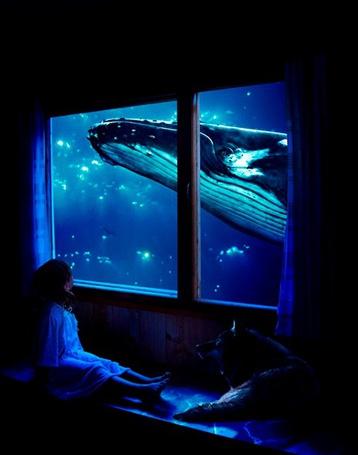 Фото Девочка с волком, наблюдают за китом в окне