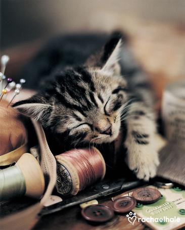Фото Котенок отдыхает на швейных предметах