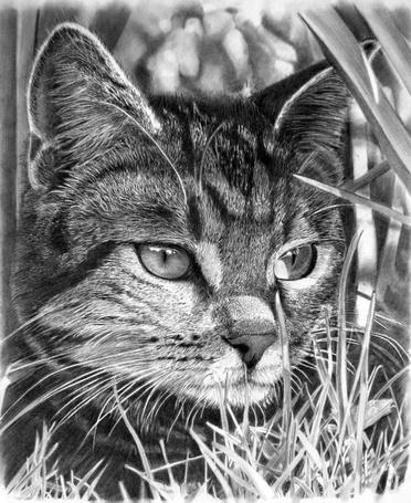 Фото Рисунок кота карандашом