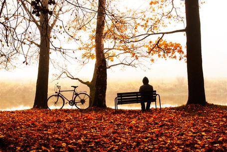 Фото Мужчина сидит на лавочке, рядом стоит прислоненный к дереву велосипед, земля покрыта осенними листьями