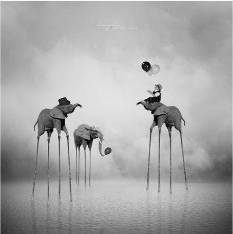 Фото Слоны с длинными ногами стоят в воде, на одном из них сидит ребенок и играется с воздушными шариками, фотограф Ilayda Portakaloglu