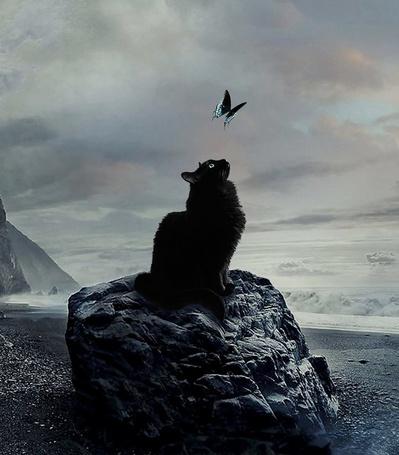 Фото Черный кот сидит на камне и смотрит на бабочку